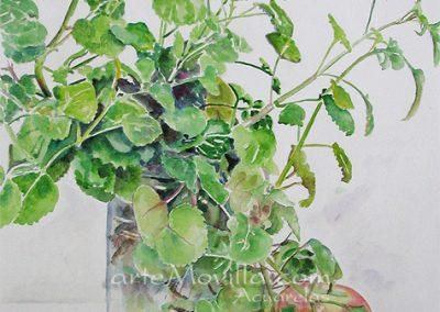 M. Angeles Movilla - Manzanas y planta Acuarela 46,5x32cm