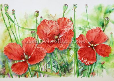 M. Angeles Movilla - Tres amapolas Acuarela 66x101cm