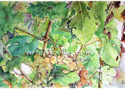 M. Angeles Movilla - Uvas blancas Acuarela 66x101cm
